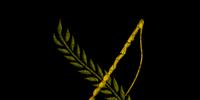 Codex entry: The Tale of Iloren