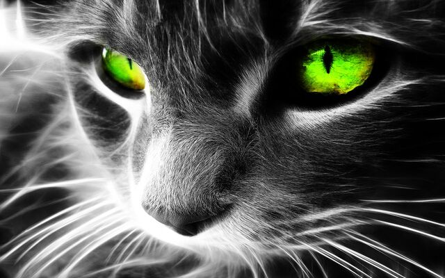 File:Emerald Cat.jpg