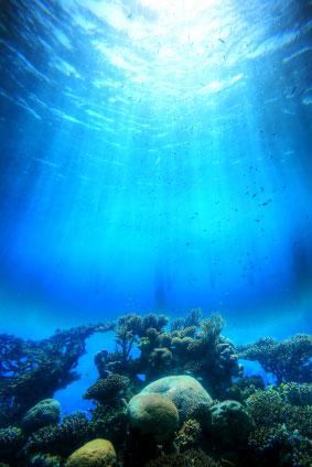 File:Ocean coral.jpg