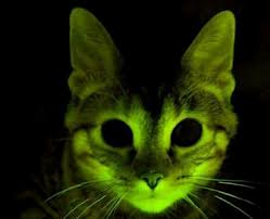 File:Poisoncat.jpg