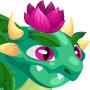 Nenufar Dragon m2