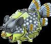 DQVIII - Wild boarfish