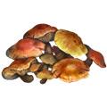 Enoki Mushrooms.jpg
