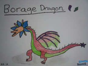 BorageDragon NemiS