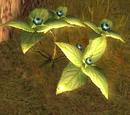Oneberry bush