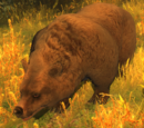 The Escaped Dancing Bear