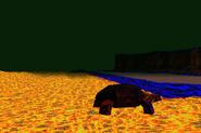 Tortoise Downertexture1