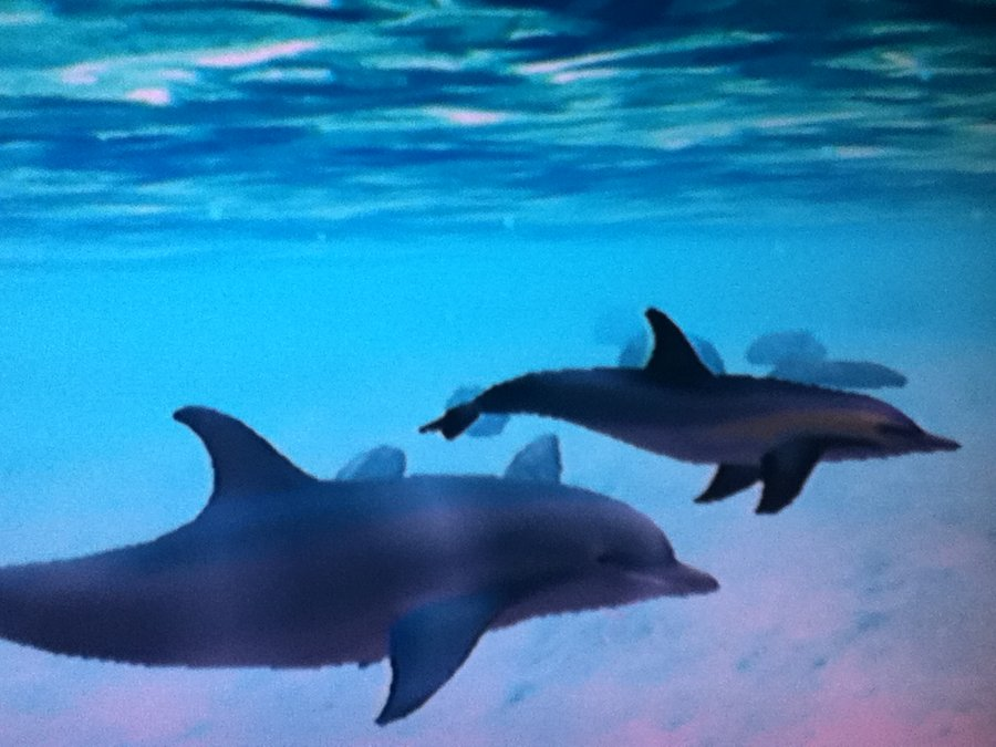 dolphin ecco the dolphin wiki fandom powered by wikia. Black Bedroom Furniture Sets. Home Design Ideas