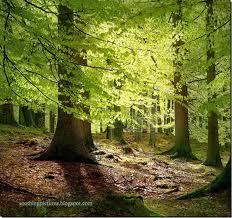 File:Forest6.jpg