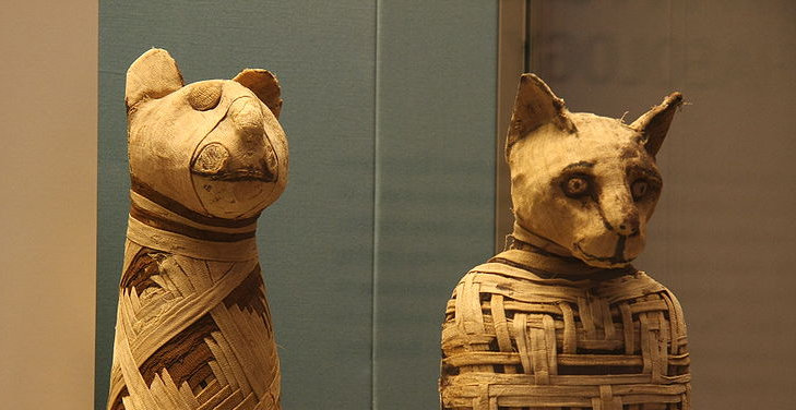 Dlaczego Egipcjanie czcili koty?