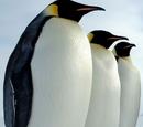 Keisaripingviini