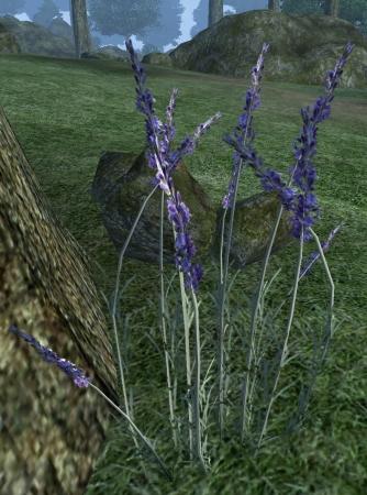 File:Lavender.jpg