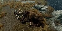 Dead Mammoth