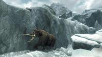 Frozenmammoth
