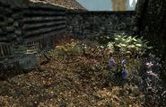 Honeyside garden