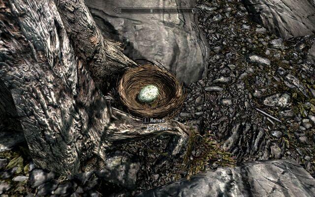 File:Skyrim brids nest.jpg