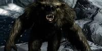Werebear (Dragonborn)