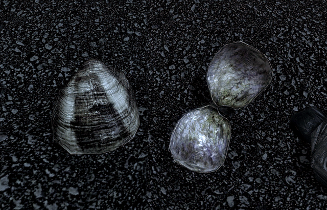 File:Clam (Skyrim).png