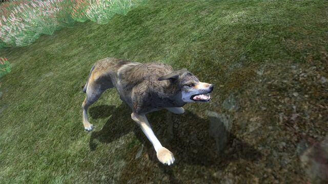 File:A Wolf.jpg