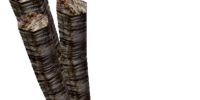 Trama Root (Dragonborn)