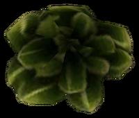 Scrib Cabbage Tribunal Ingredient