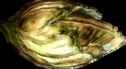 Nordic barnacle