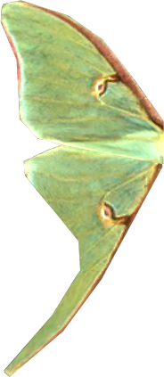 File:Luna Moth wing.png