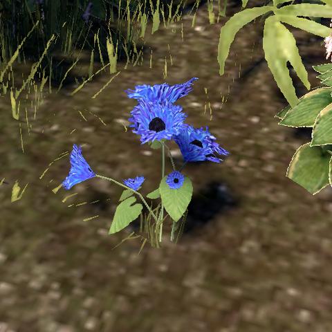 File:Corn Flower.png