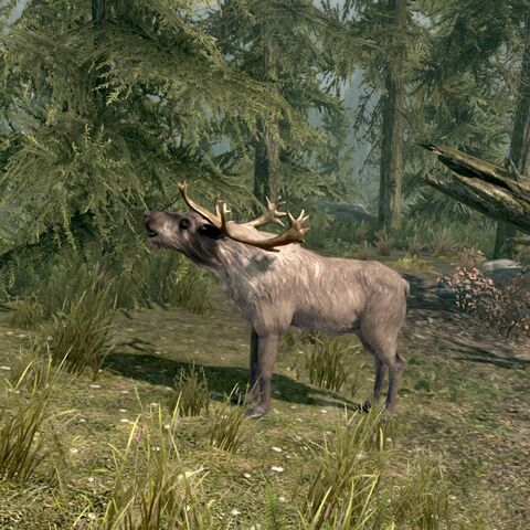 File:Skyrim Bugling Elk.jpg