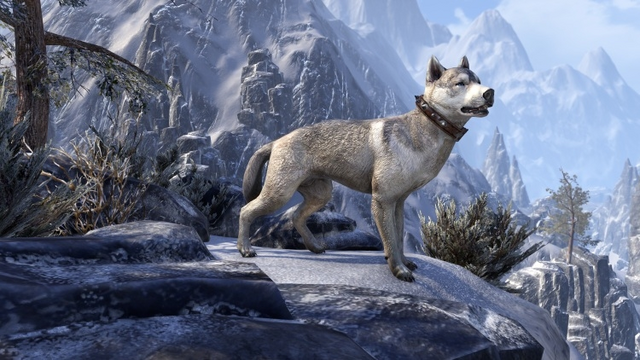 File:Markarth Bear-Dog.png