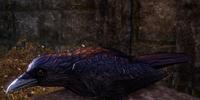 Crow (Online)