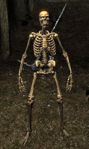 File:Skeleton (Skyrim).png