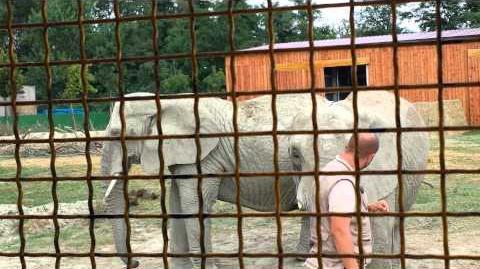 Zoo di Ravenna. Elefanti da spettacolo.