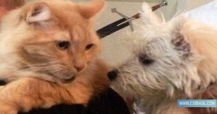 Zuni and sampson