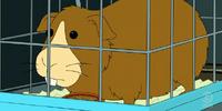 Fry's guinea pig