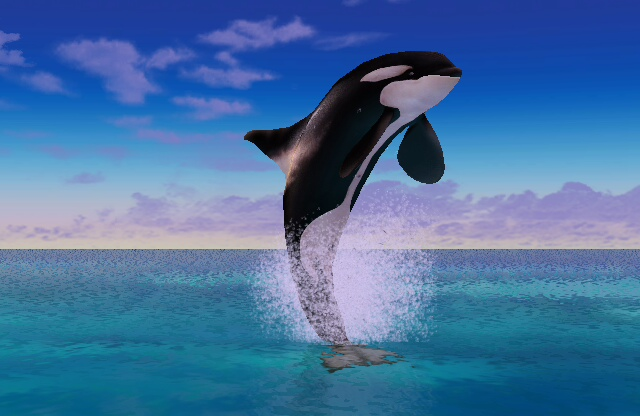 orcas chat sites Thrill your walls now with a stunning orcas print from the world's largest art  gallery choose from thousands of orcas artworks with the option to print on  canvas,.