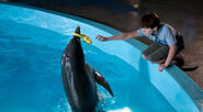 Dolphin Tale 8