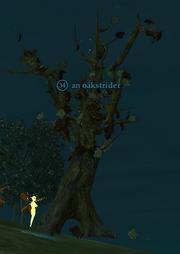 An oakstrider