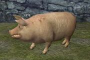 A pig (Thundering Steppes)