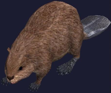 File:A magical mini beaver plushie display.jpg