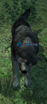 A rabid pup