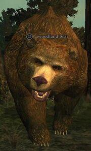 A woodland bear