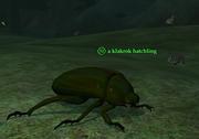 A klakrok hatchling