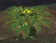 Race carnivorous plant