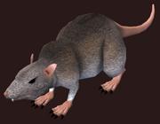 Rat Plushie (Visible)