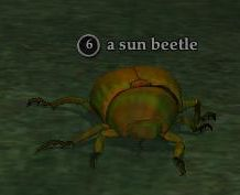 File:Sun beetle.jpg