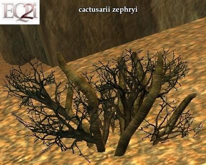 File:Fruitius cactusarii zephryi (Visible).jpg