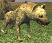 Race hyena