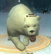 A glacier bear