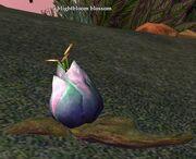 A blightbloom blossom